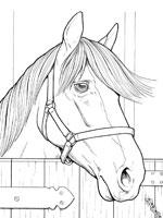 Coloriages de chevaux - Jeux de poney qui saute ...