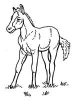 Coloriage cheval sur top coloriages coloriages cheval - Coloriage poulain ...