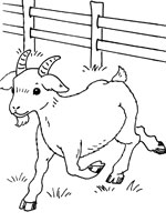Coloriage chevreau my blog - Coloriage de chevre ...