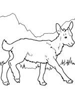 Le loup et les sept chevreaux personnage - Dessin chevreau ...
