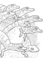 Coloriage De Crocodile A Colorier.Coloriage Crocodile Sur Top Coloriages Coloriages Crocodile