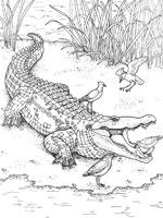 Crocodile gif - Crocodile en dessin ...