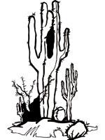 Coloriage d sert sur top coloriages coloriages desert - Coloriage cactus ...