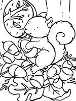 Coloriage ecureuil sur top coloriages coloriages ecureuil - Coloriage d ecureuil ...