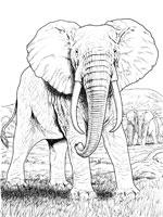 Dessin a imprimer animaux afrique - Animaux d afrique coloriage ...