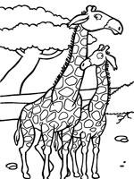 Coloriage Girafe sur Top Coloriages - Coloriages girafe