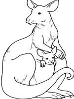 Coloriage Kangourou.Coloriage Kangourou Sur Top Coloriages Coloriages Kangourou