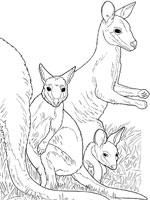 comment dessiner un wallaby
