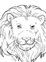 coloriage de gueule dun lion