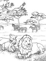 Coloriage Lion Sur Top Coloriages Coloriages Lion