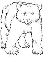 Coloriage ours sur top coloriages coloriages ours - Dessin de grizzly ...