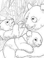 Dessin de panda - Panda pour coloriage ...