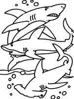 Coloriage requin sur top coloriages coloriages requin - Dessin requin marteau ...
