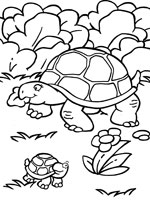 Coloriage Tortue sur Top Coloriages - Coloriages tortue