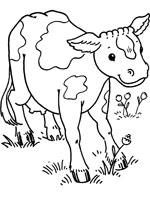 Coloriage vache sur top coloriages coloriages vache - Coloriage petit veau ...